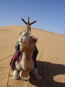 El camello que sufría el peso de Antonio
