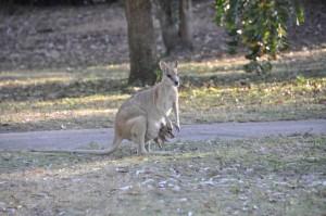australia1108 (Medium)