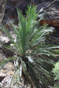 australia1236 (Medium)