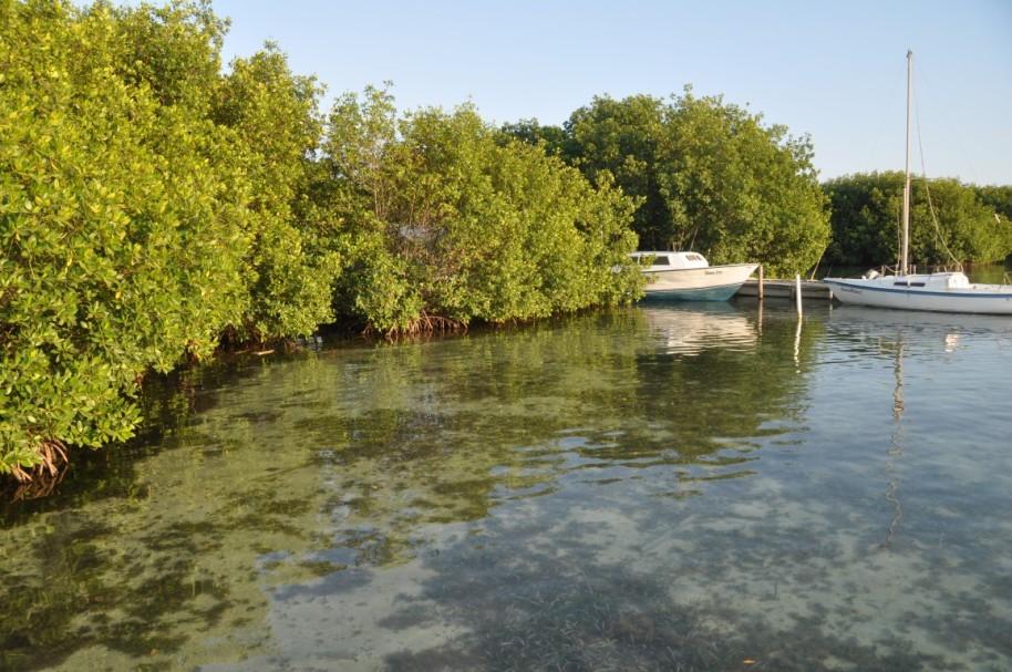 Belize990 (Medium)