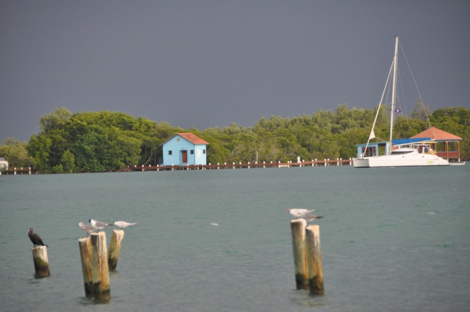 Belize998 (Medium)