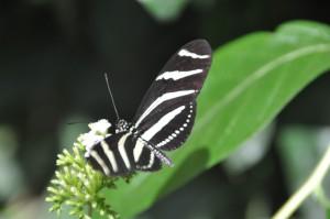 CostaRica331 (Medium)