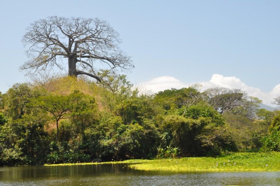 Nicaragua617 (Medium)