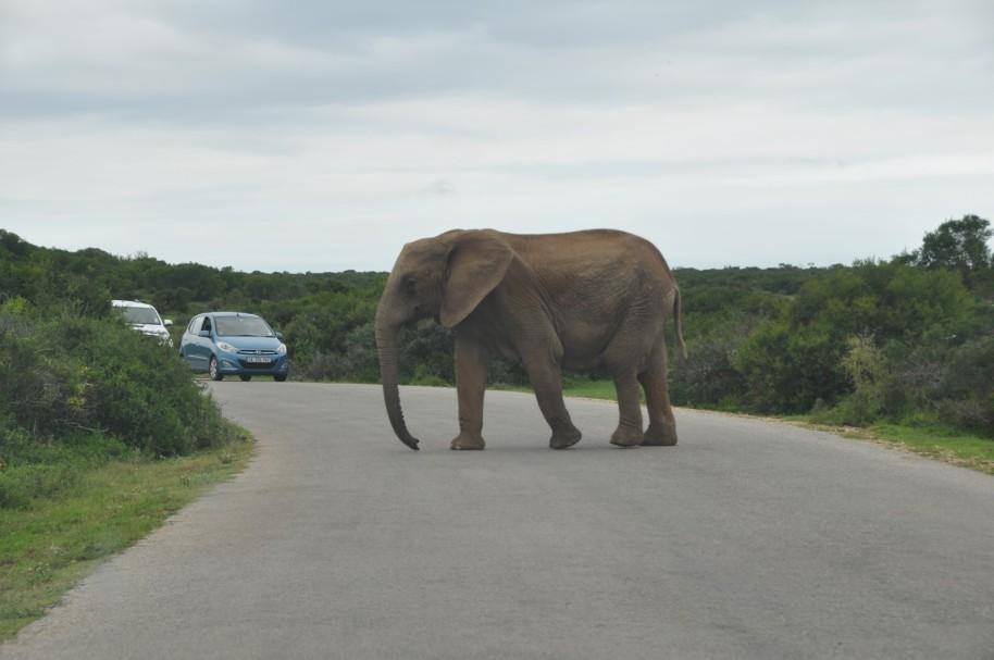 Sudafrica 0114