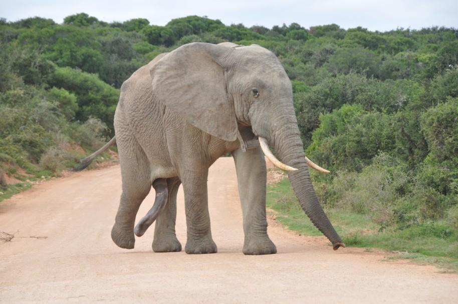 Sudafrica 0199