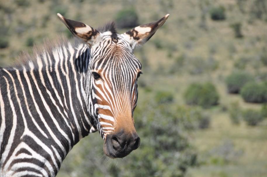 Sudafrica 0369
