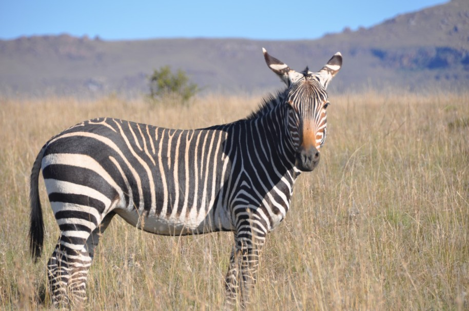 Sudafrica 0374