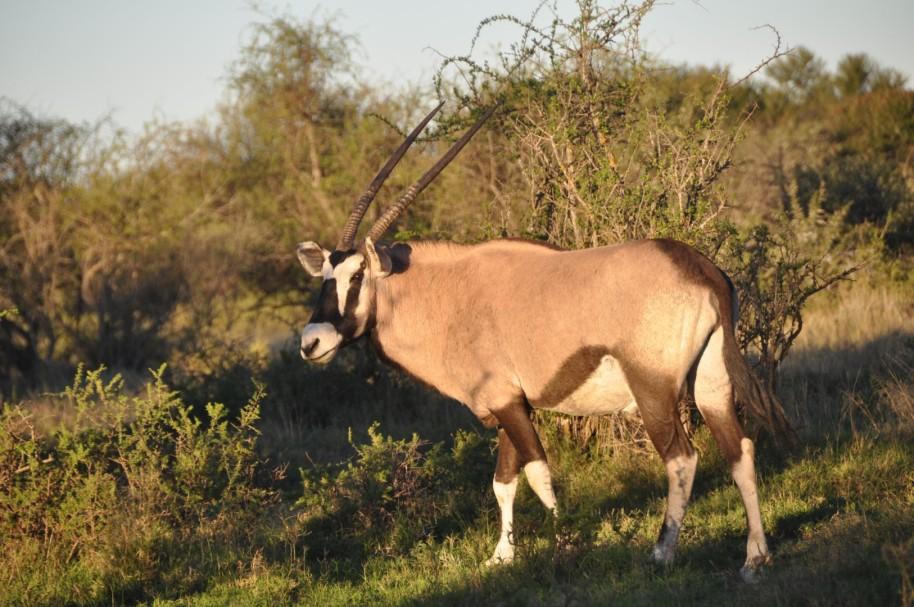 Sudafrica 0384