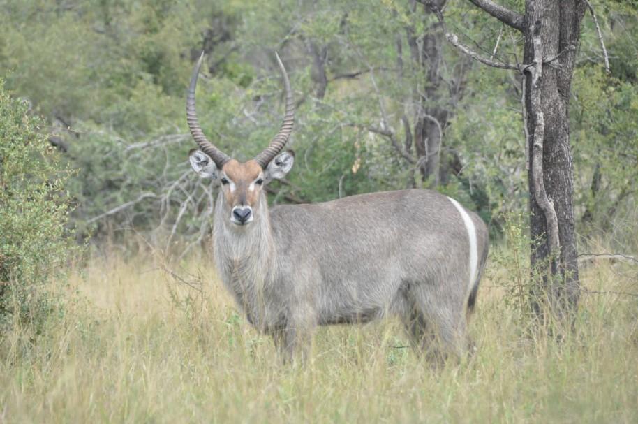 Sudafrica 0613